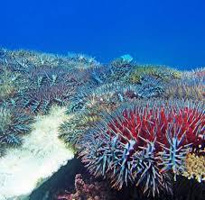 Great Barrier Reef (Australia): Shark attack in Cairns - man dead | world